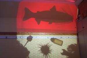 Fischprojektion